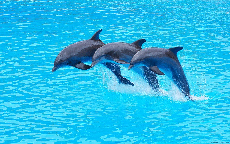 Надписью, красивые картинки с дельфинами на море