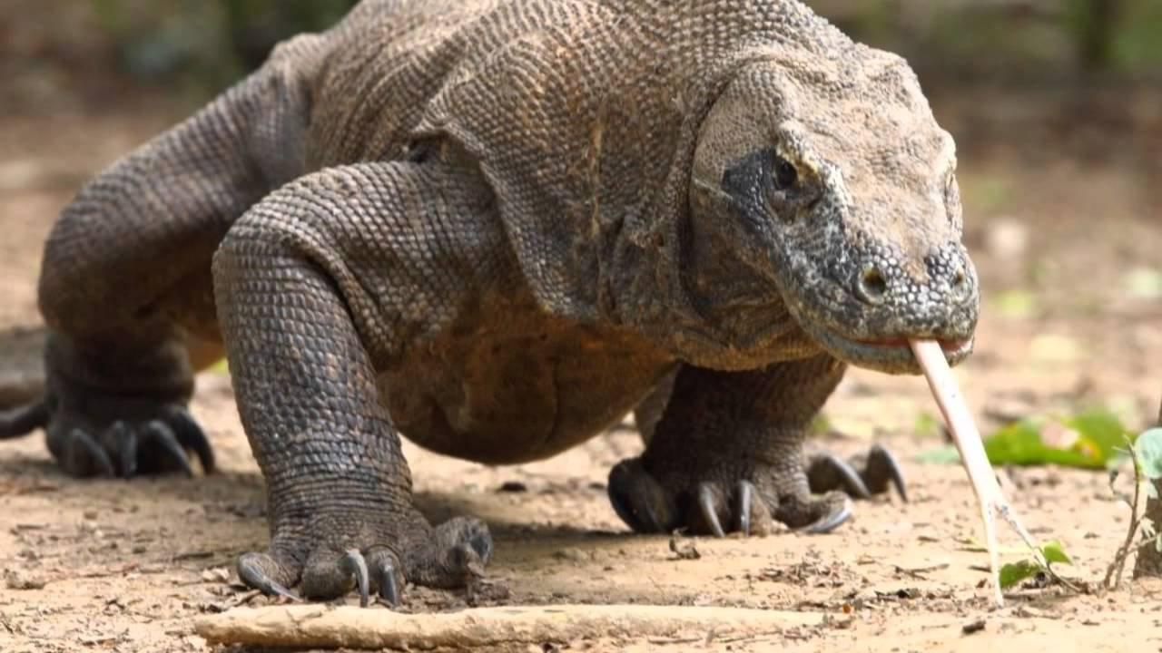 юбка-колокол завышенной дракон острова комодо фото подсвечник