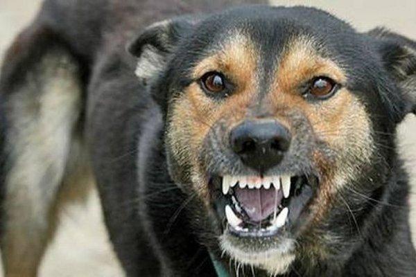 В Тульской области зафиксирована вспышка бешенства животных