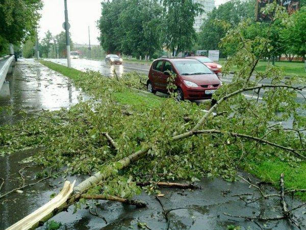 Спасатели рассказали о ликвидации последствий после урагана в Москве