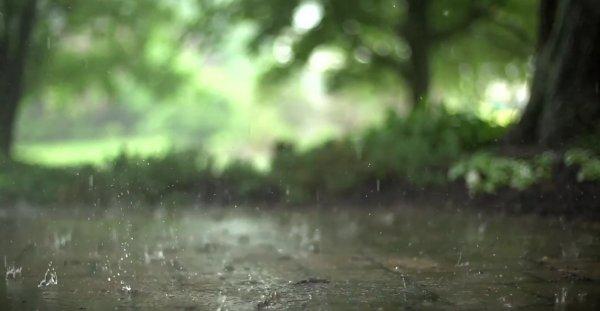 Утро в Саратове может начаться с дождя