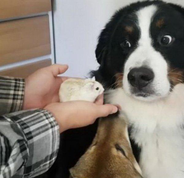 Собака трахает девушку зоофилку