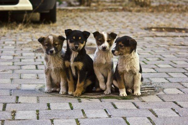 Под Воронежем очевидцами жесткой расправы над щенками стали дети