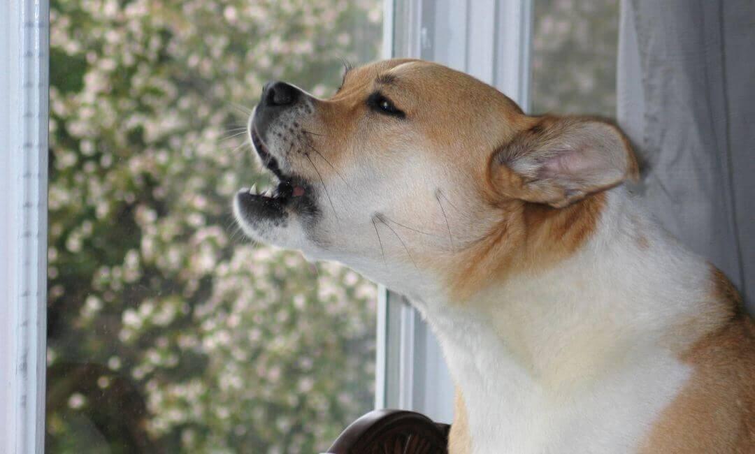 Штраф за лай собаки в квартире