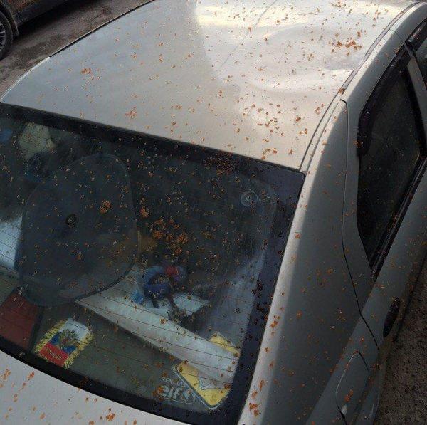 Вандалы-гурманы из Санкт-Петербурга забросали автомобили красной икрой