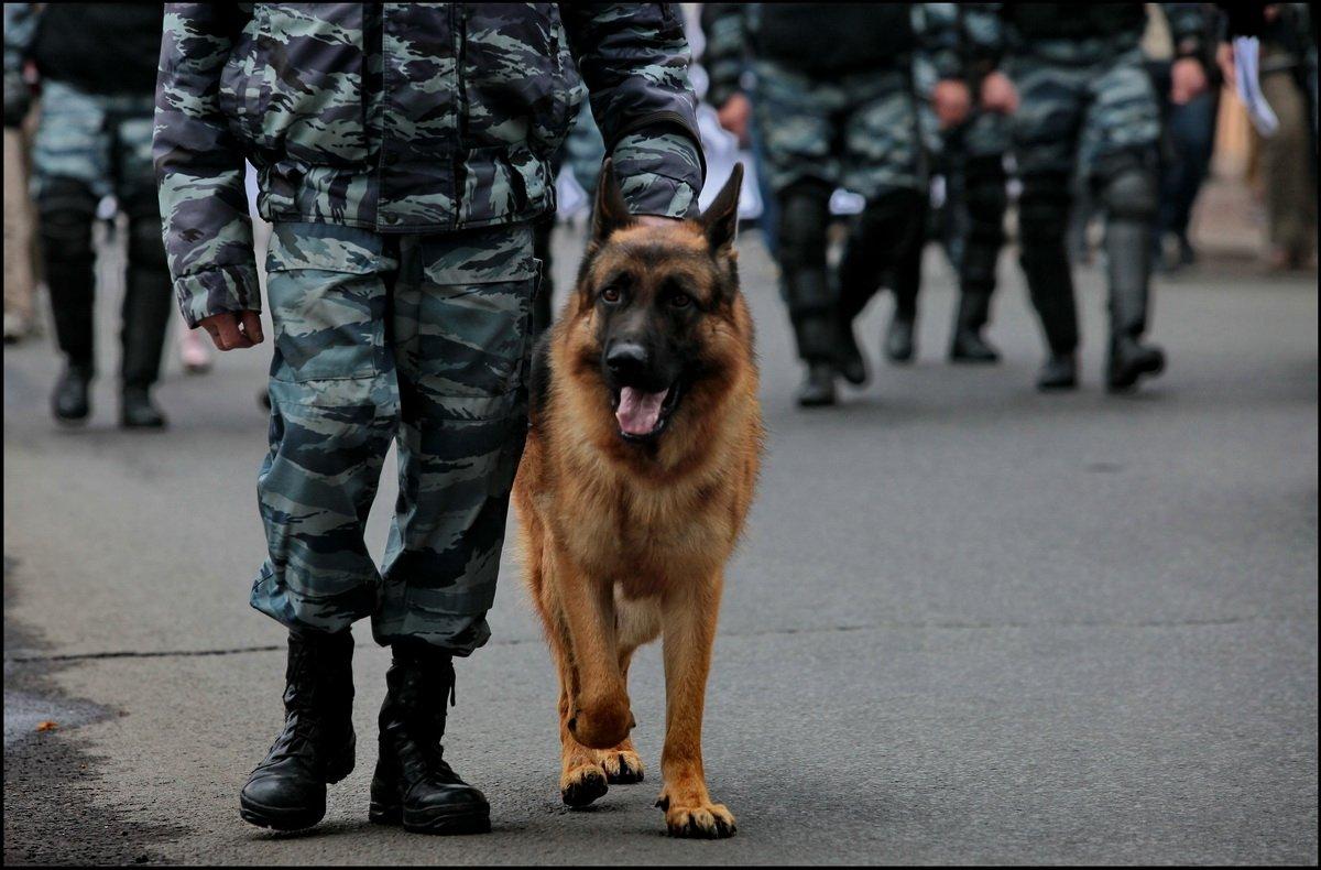 какие собаки служат в полиции дальнейшие