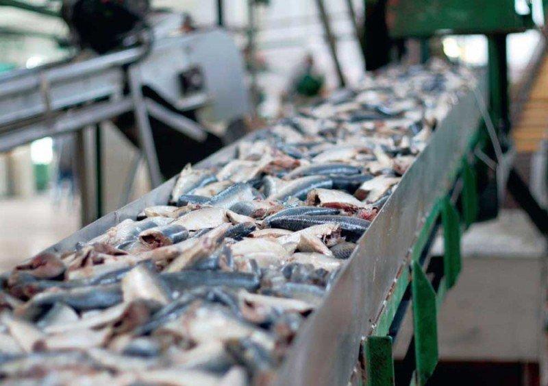 В Зауралье открылся первый рыбоводный комплекс