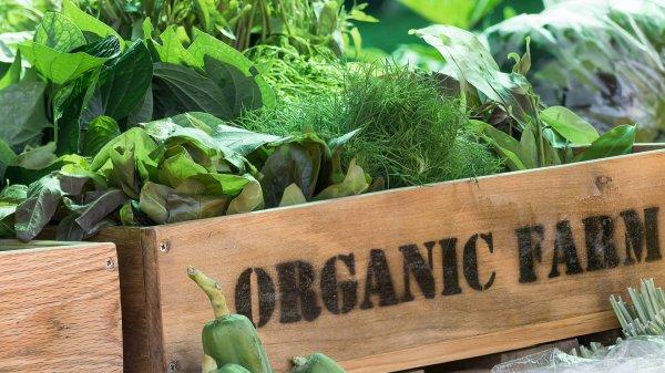 Специалисты: Органическое фермерство способно прокормить население Земли