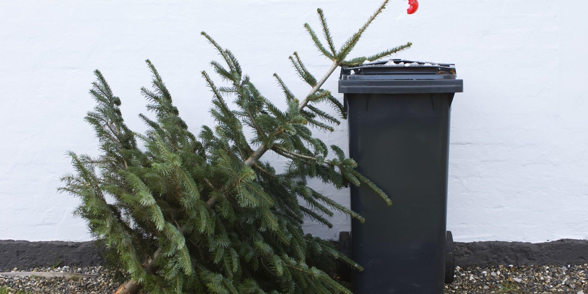 В Россельхознадзоре дали советы курянам, куда деть новогоднюю ёлку