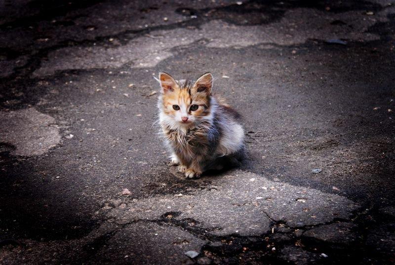 Картинки несчастный котенок