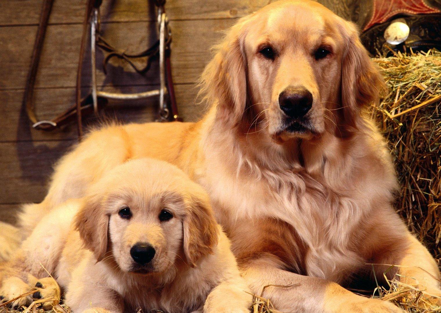Картинка для детей собака и щенок