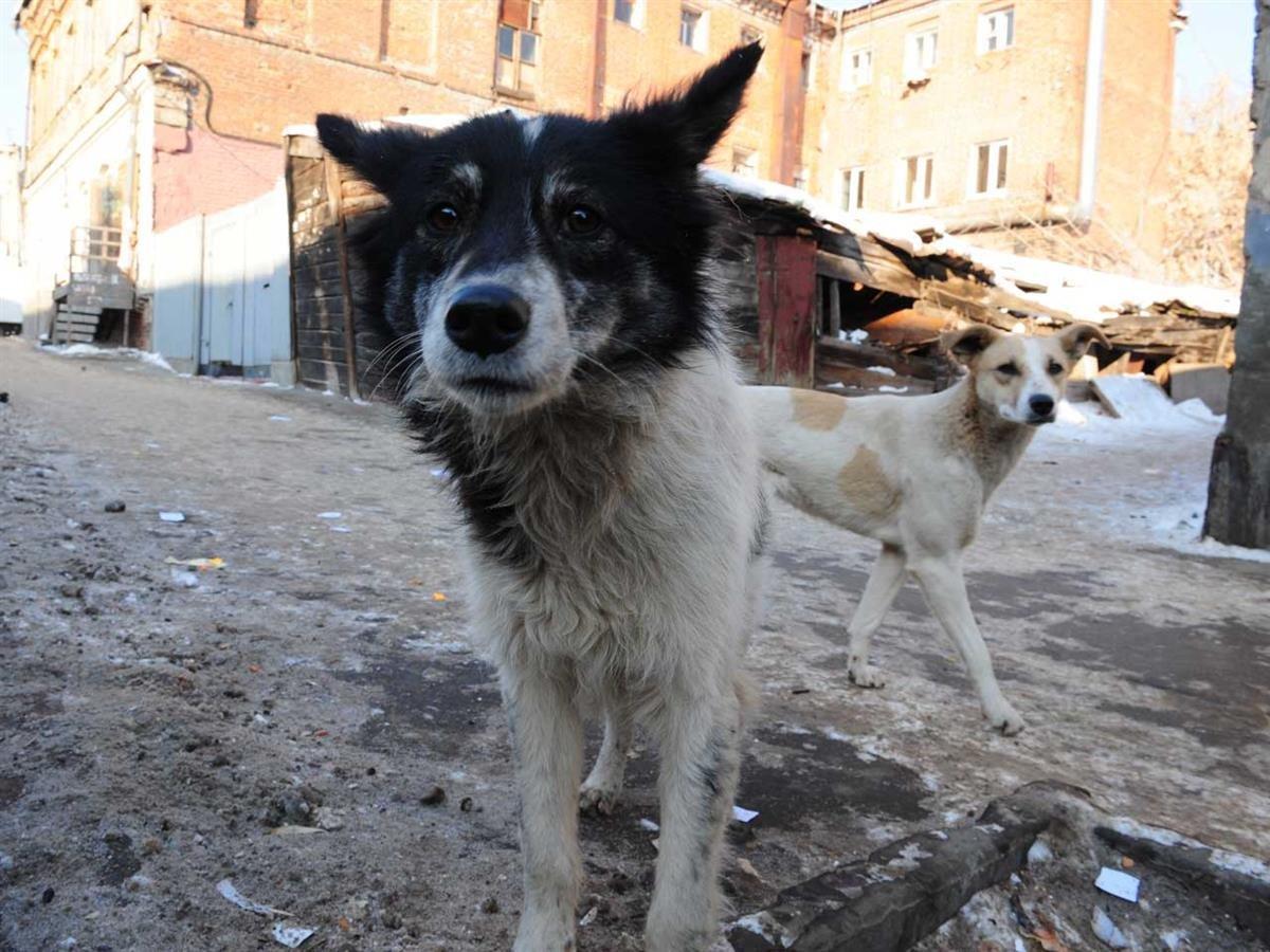 ВРостовской области ветеринар безжалостно убил 173 собаки
