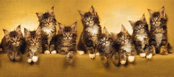 В Москве мужчина при разводе забрал себе 8 кошек вместо квартиры