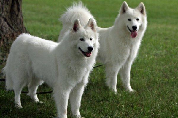 Ученые назвали основные факторы возникновения аллергии у собак