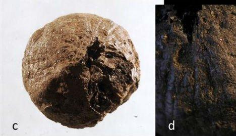 Археологи отыскали  луковицу возрастом 1500 лет