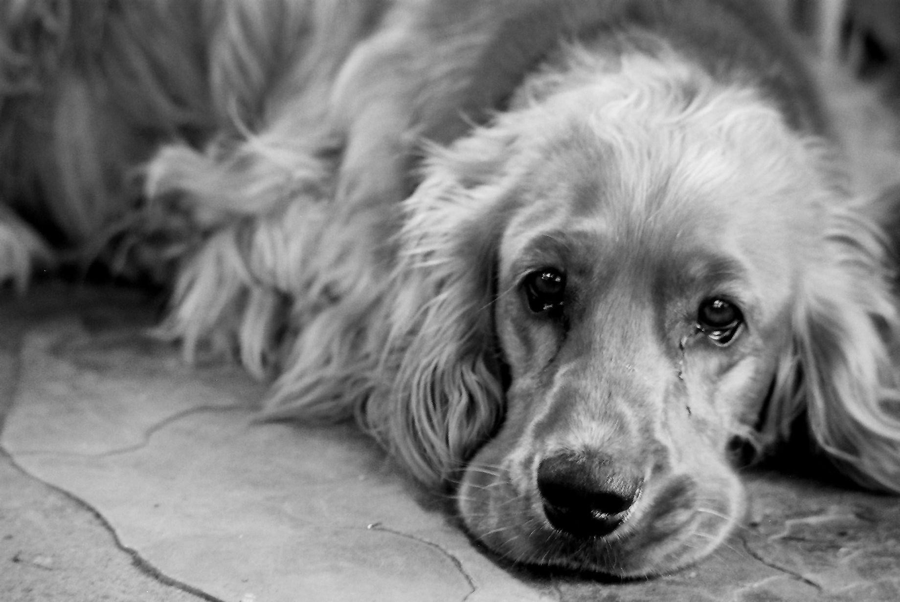 ВПетербурге мужчина зарезал свою собаку наглазах улюдей
