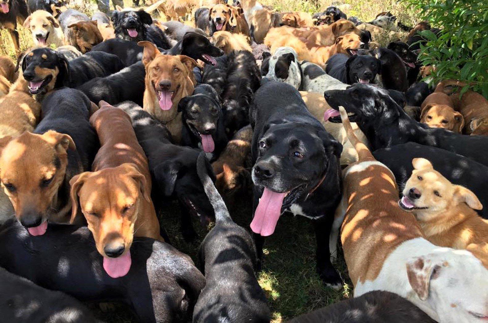 работа рай для собак картинки данная