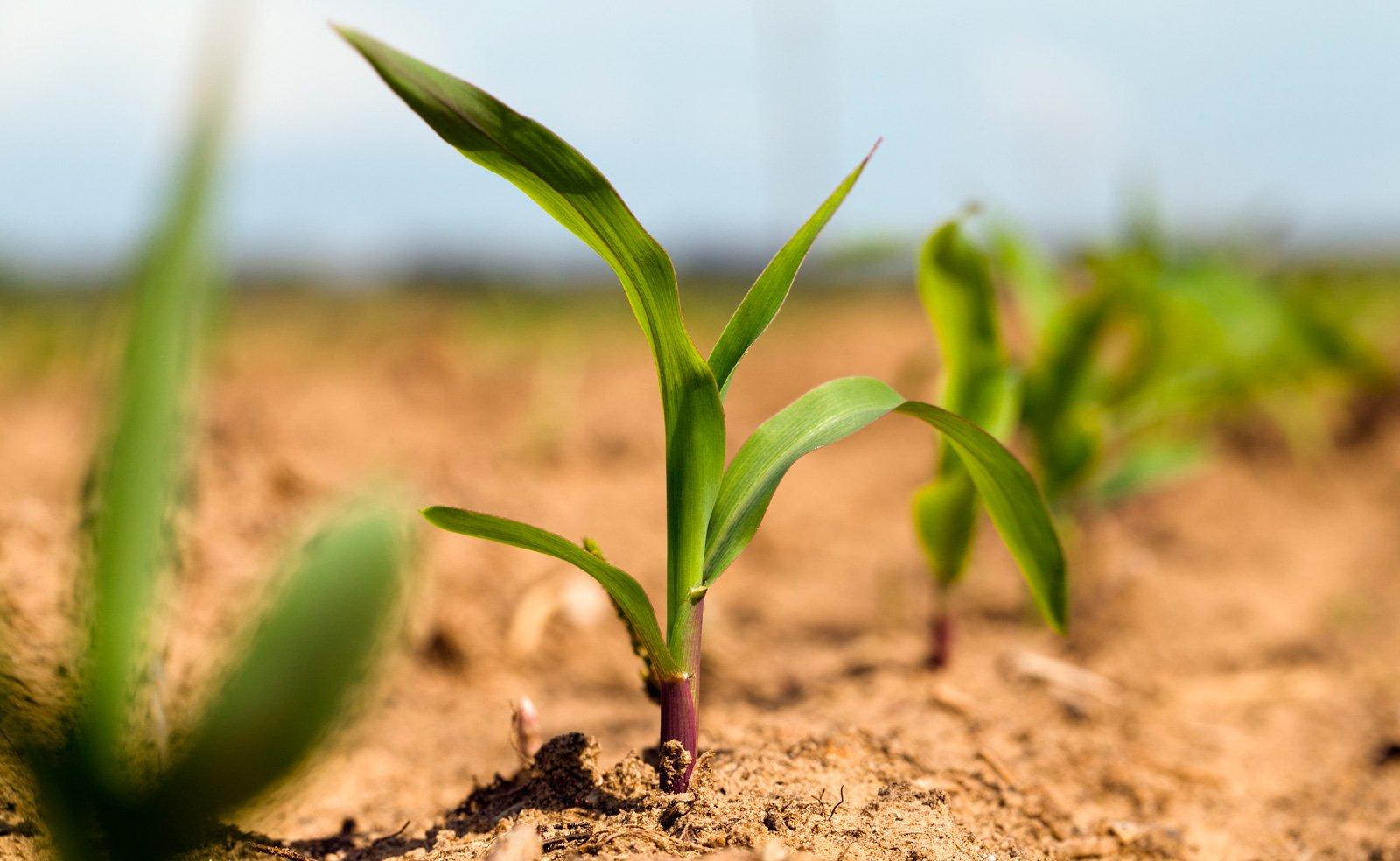 Растения могут общаться между собой спомощью химических веществ— Ученые