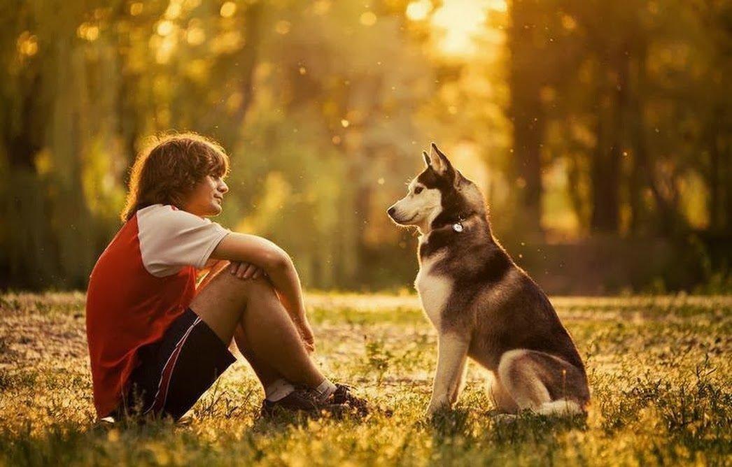 Человек и собаки картинка