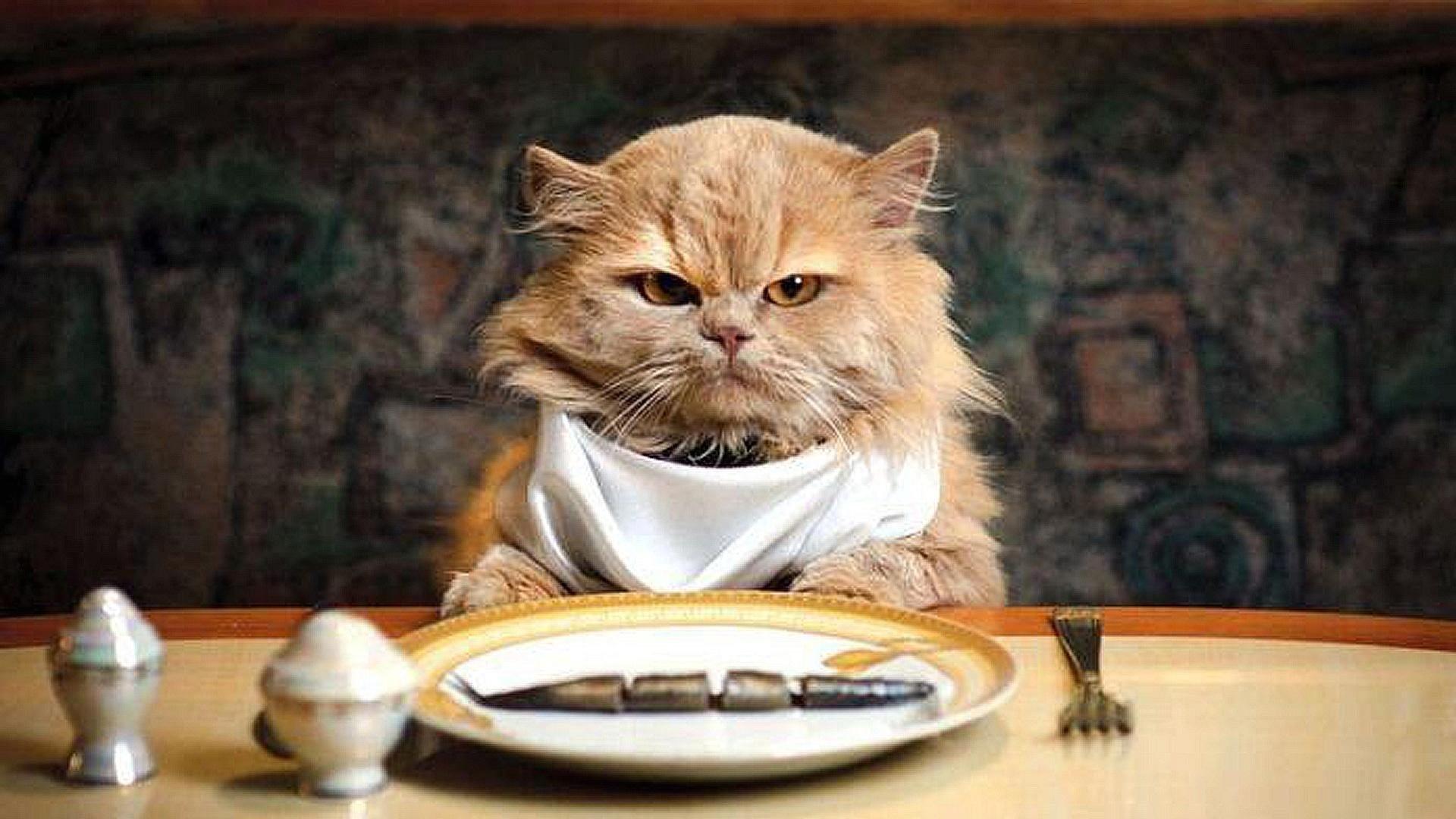 кухня картинка смешная животные идет на обед готовил репортаж жизни