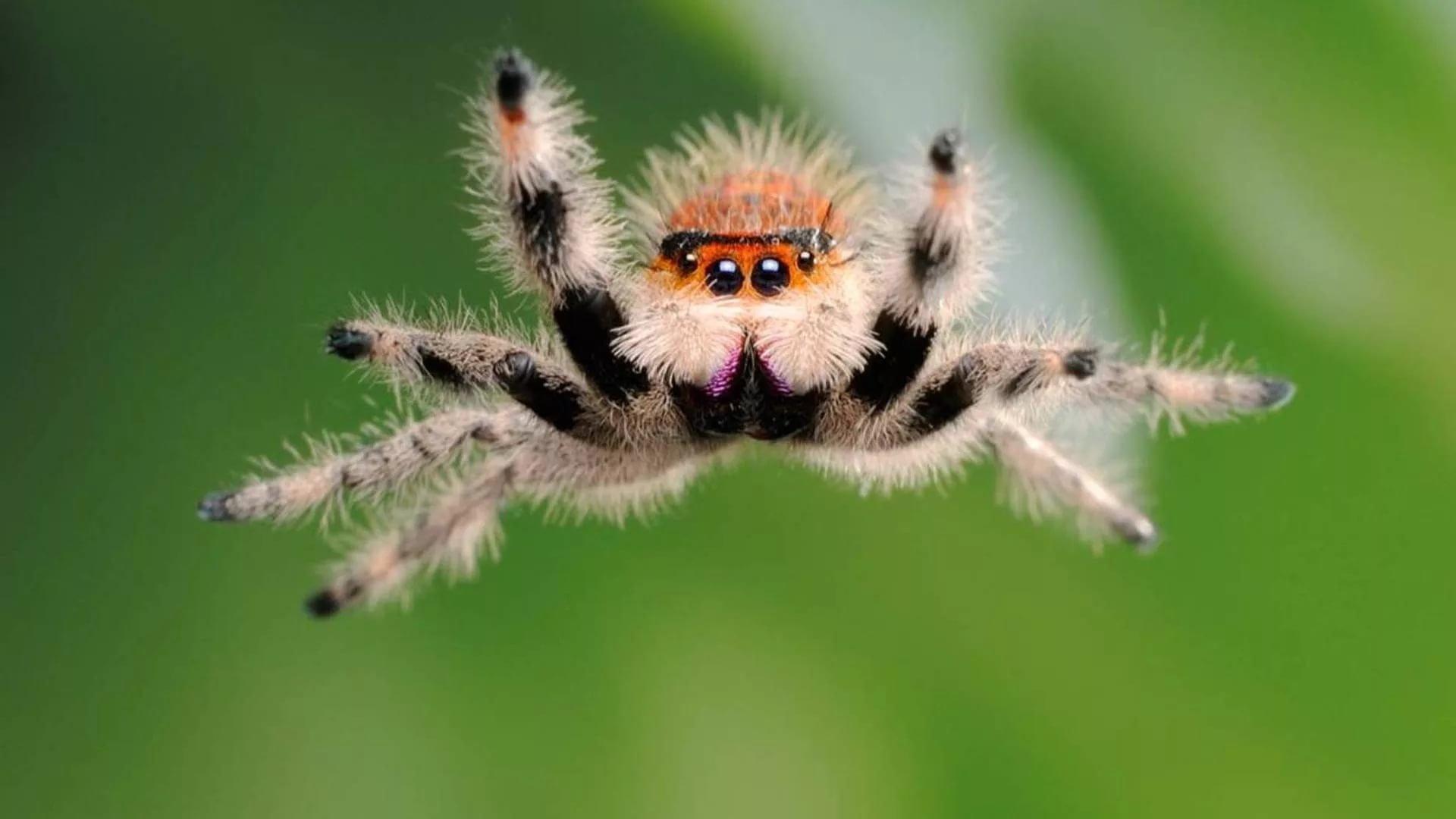 Прикольная картинка паука, открытка
