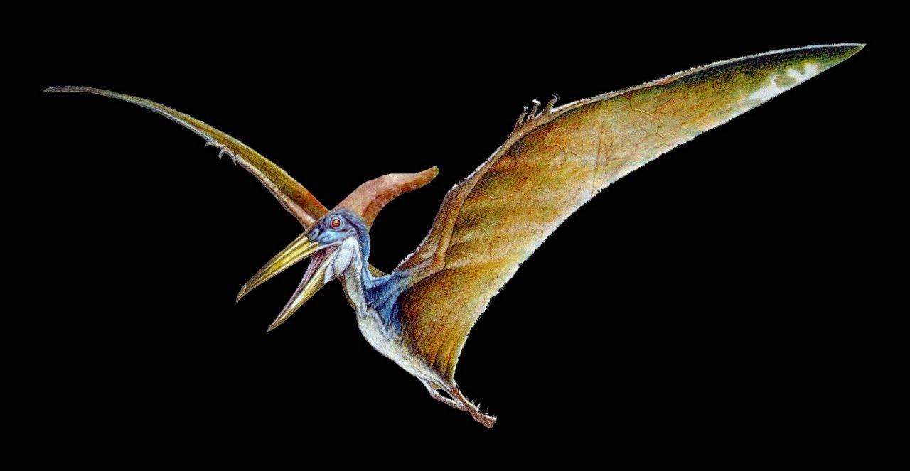 Картинки летающих ящеров