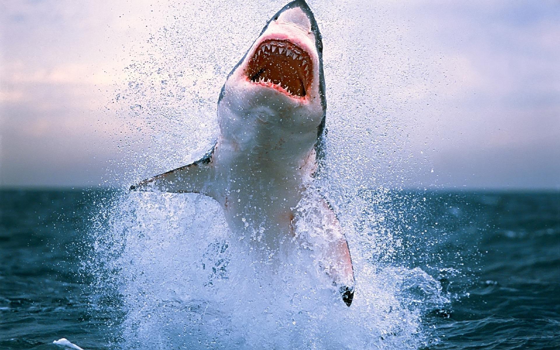 ВСША отыскали красную акулу ииспугались