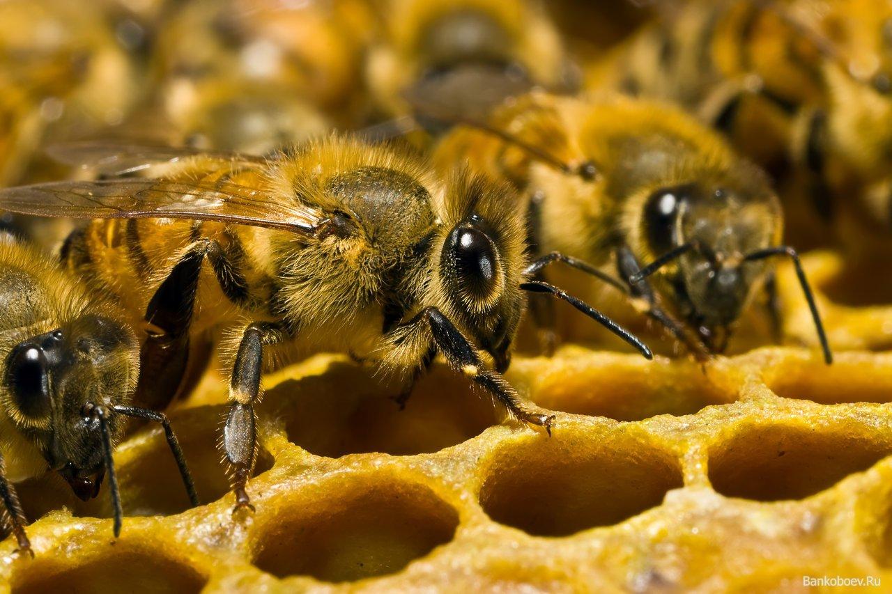 Рой пчел атаковал тележку схот-догами вцентре Нью-Йорка