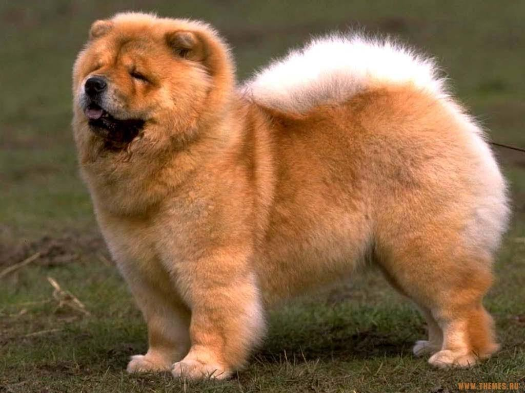 Заукус полицейского вСоединенном Королевстве арестовали щенка