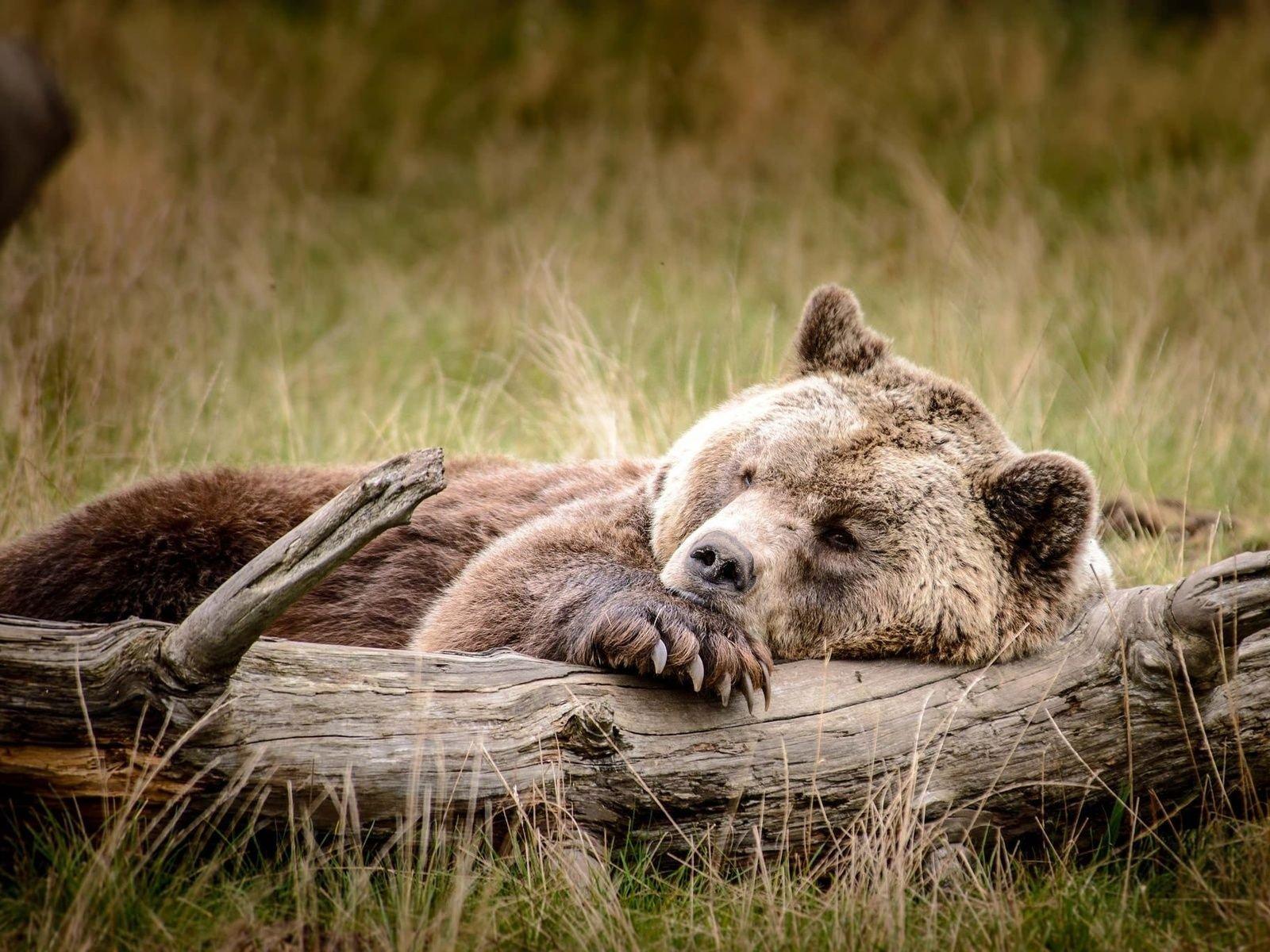 Февраля, красивые картинки с животными и природой прикольные