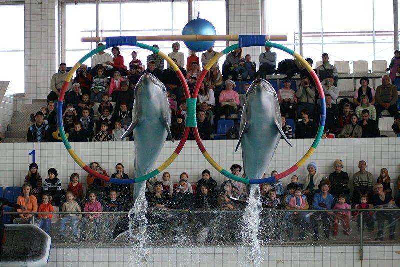 Ученые выяснили, что дельфинам нравится смотреть мультики про Губку Боба