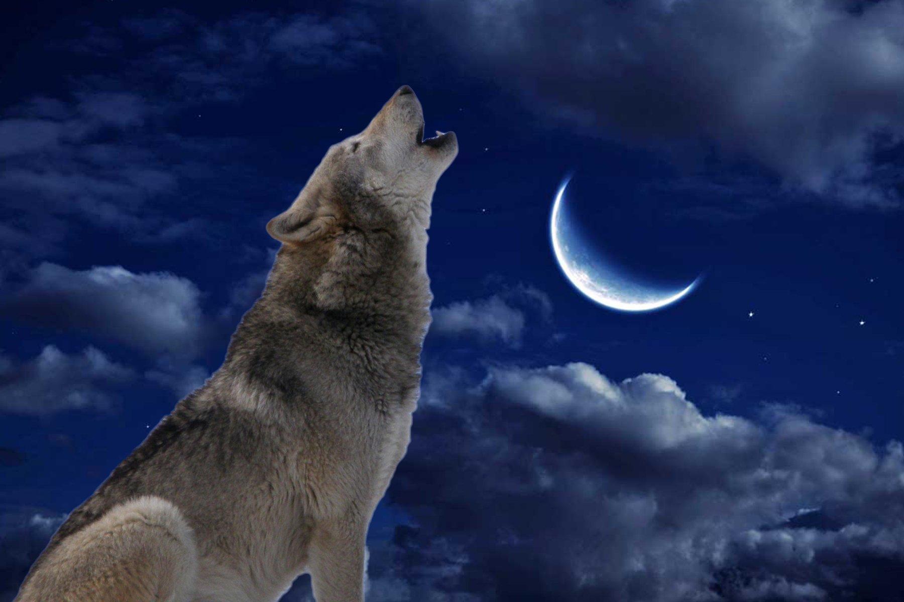 Тату волк: значение для парней и девушек, история, описание, фото | 1200x1800