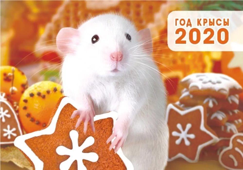 С новым годом, крысы!