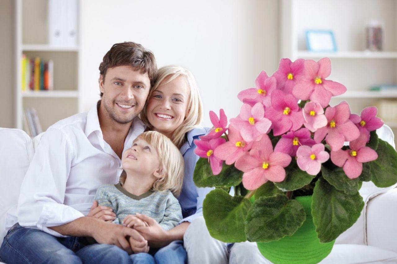 картинки цветка семьи ветер