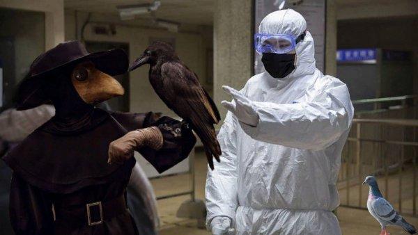 Чума 21-го века: Коронавирус из Китая угрожает животным и фауне России  учёные