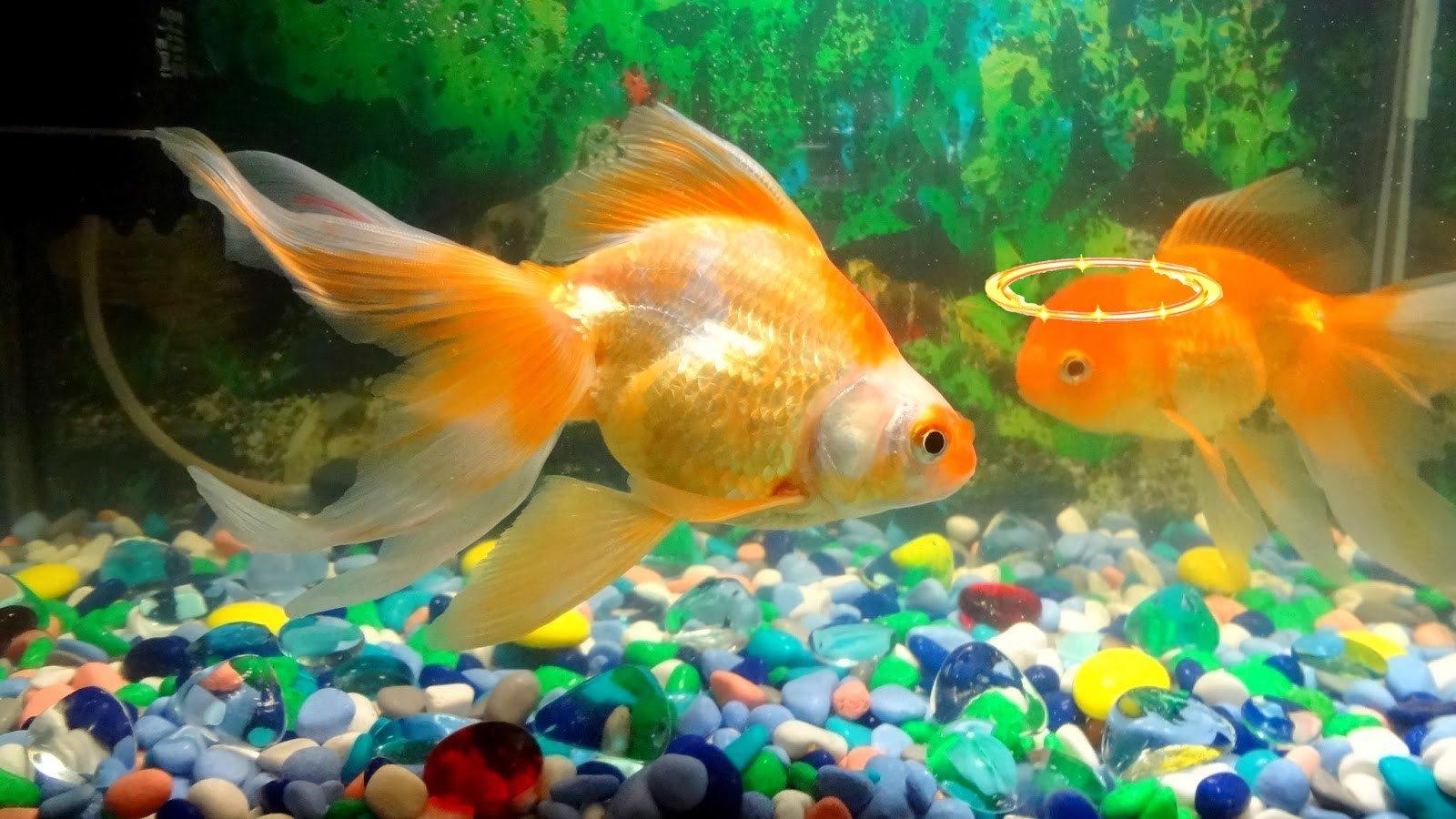 фото цвета удачи для рыб имени