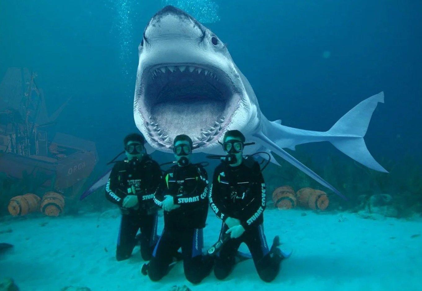 Египетские акулы фото