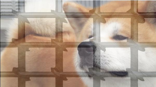В Ленобласти мальчик попал в реанимацию из-за нападения собаки