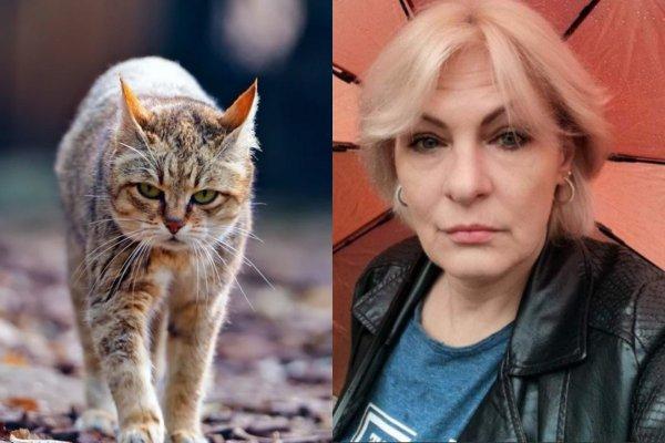 В Москве за возврат кота-потеряшки требуют 20 тысяч рублей