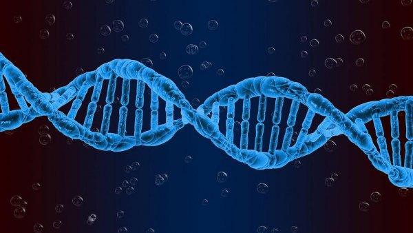Биологи обнаружили биомаркер продолжительности жизни и фертильности